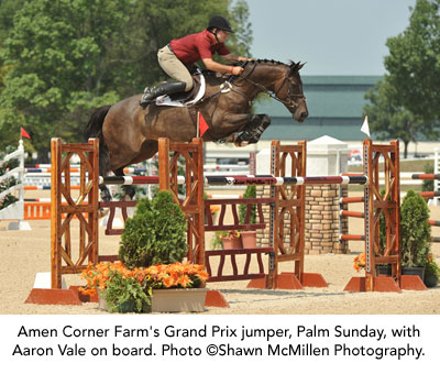 Amen Corner Farm's Grand Prix jumper, Palm Sunday, with Aaron Vale on board. Photo ©Shawn McMillen Photography.